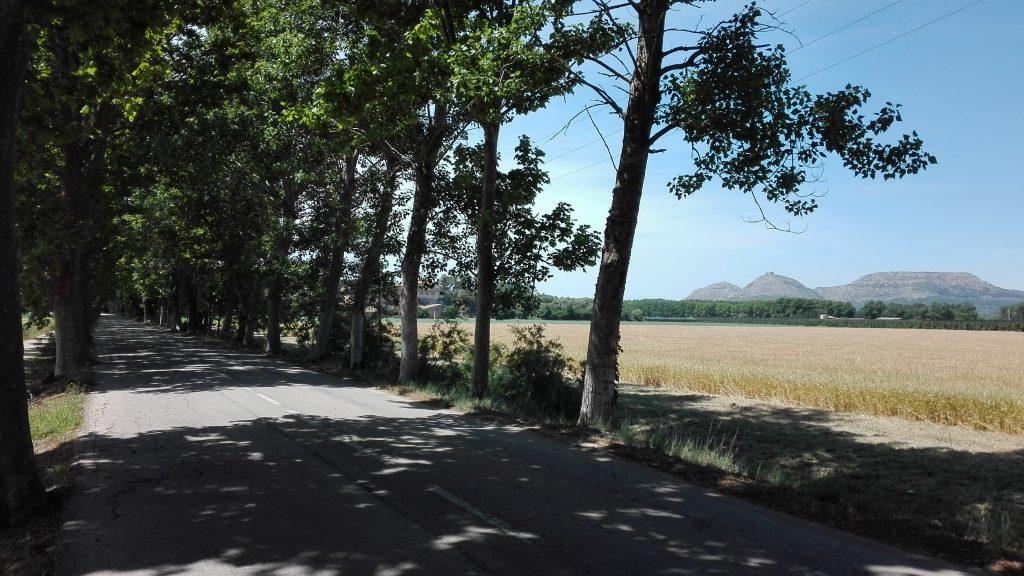 carretera-mas-pinell-carril-bici